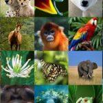 Canlıların Sınıflandırılmasında Kullanılan Farklı Ölçüt ve Yaklaşımlar Nelerdir?