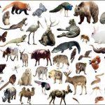 Hayvanlar Alemi – Hayvanların Özellikleri ve Sınıflandırılması