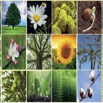 Bitkiler Alemi – Bitkilerin Özellikleri, Yapısı, Kısımları, Üreme ve Büyüme