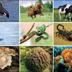 Hayvanların Biyolojik ve Ekonomik Önemi – Kullanım Alanları