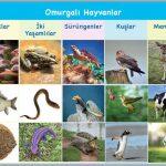 Omurgalı Hayvanların Özellikleri ve Çeşitleri – Örnekler