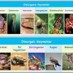 Omurgalı ve Omurgasız Hayvanların Farkları ve Benzerlikleri