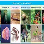 Omurgasız Hayvanların Özellikleri ve Çeşitleri – Örnekler