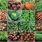 Bitkilerin Biyolojik ve Ekonomik Önemi – Bitkilerin Kullanım Alanları