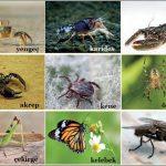 Eklem Bacaklıların Özellikleri, Yaşamı, Türleri ve Örnekler