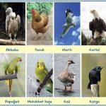Kuşların Özellikleri, Hayatı, Beslenmesi, Üremesi ve Çeşitleri