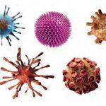 Virüs Nedir? Virüslerin Özellikleri, Yapısı, Çoğalması, Yayılması, Fadaları